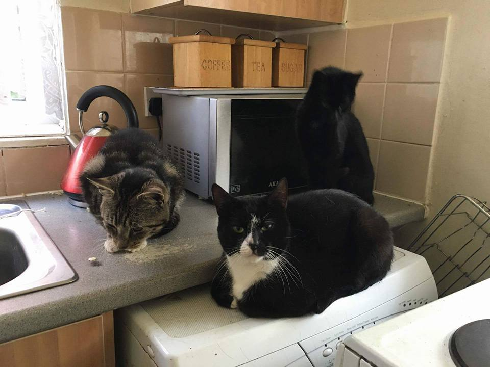 Fostering A Cat Uk